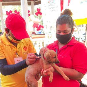 Pet adoption camp - 14 Feb (5)